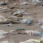 Der Plastikmüll-Export