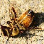Tonnenweise Insektizide